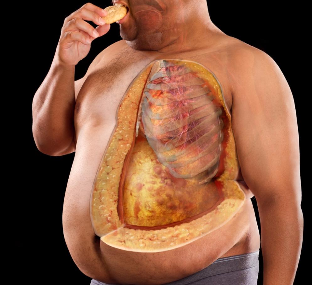 Как избавиться от висцерального, абдоминального, внутреннего жира на животе
