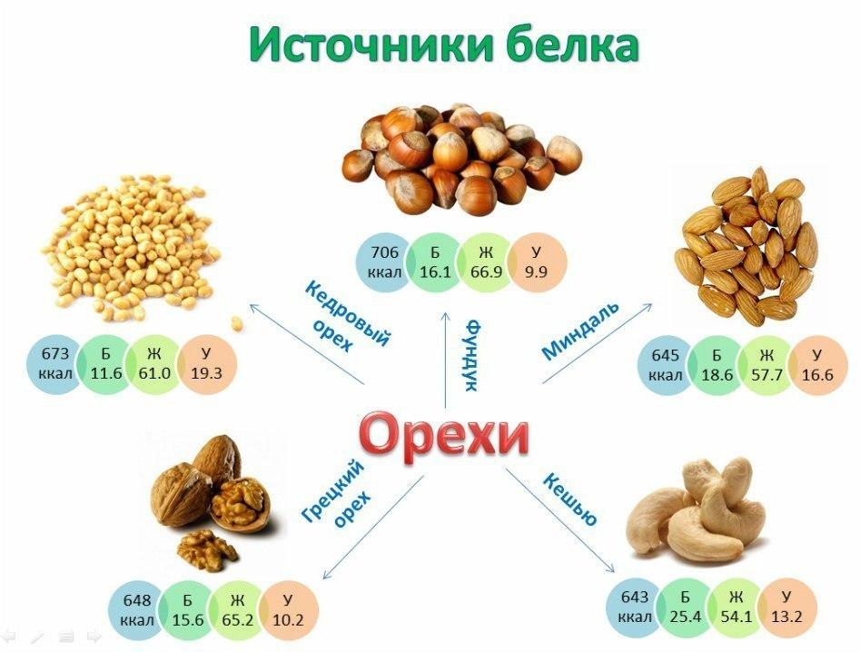 В каких продуктах есть растительный белок